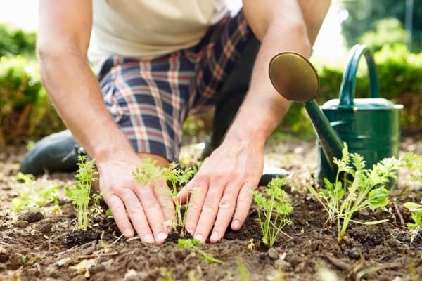 7 Sayuran yang Bisa Kamu Tanam di Rumah, Yuk Berkebun!